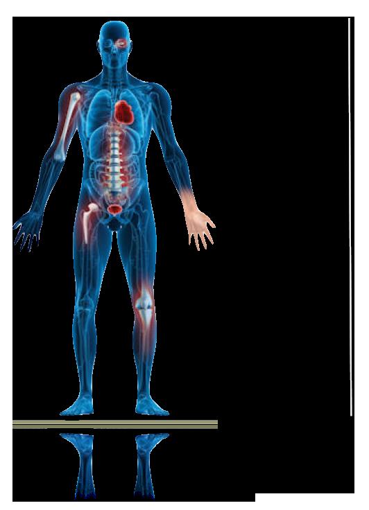 รูปร่างกายมนุษย์ตกแต่งสไลด์โชว์เว็บศัลยกรรม